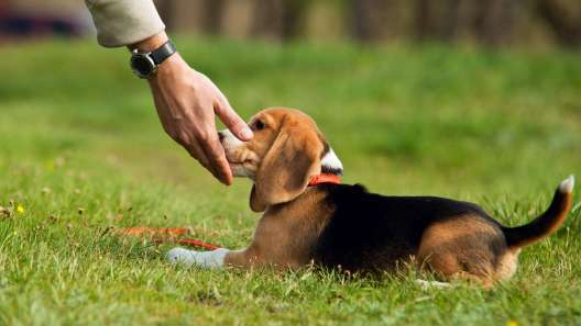 How to Teach Your Dog Nose Targeting