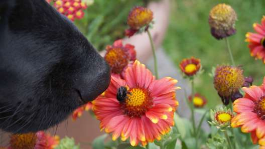 Why Do Dogs Try to Eat Bees?