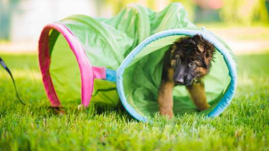 How to Keep Your Dog Engaged During Training Sessions