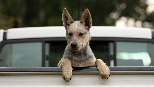 6 Useful Tips for Tailgating With Dogs