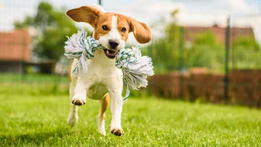 5 Outdoor Games to Play With Your Dog