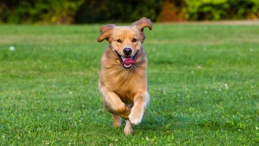 6 Ways to Keep Your Dog's Heart Healthy
