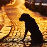dog silhouette on a street at sunset