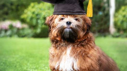 4 Benefits of Puppy Training Classes